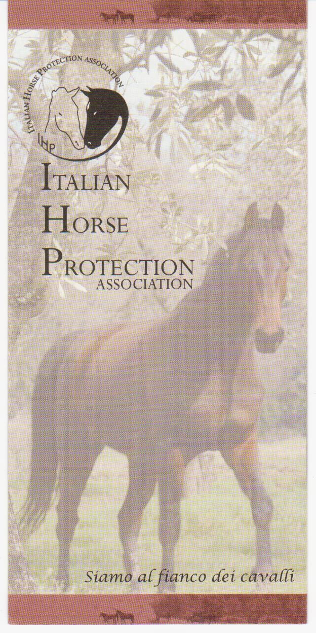 Horse_gina.jpg